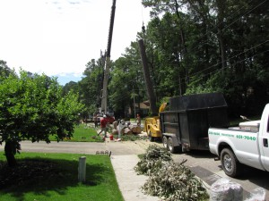 2009-06-12-tree-removal-064