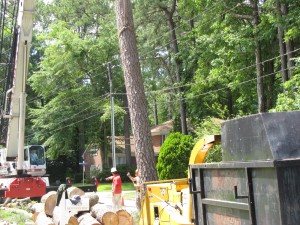 2009-06-12-tree-removal-065