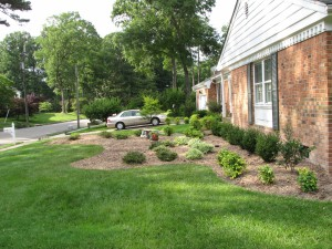 2009-06-12-tree-removal-073